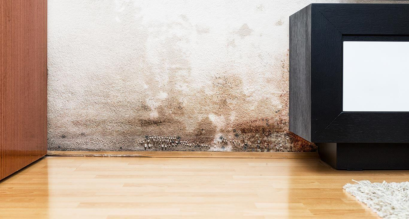 sell homes with mold to summit all cash colorado springs